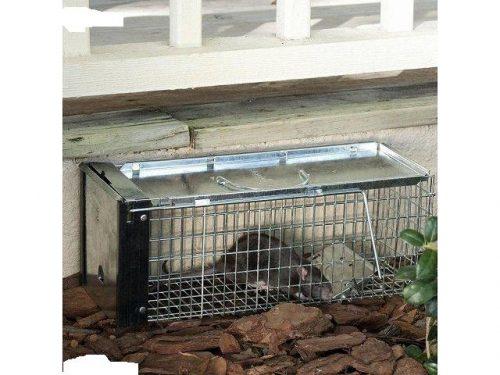 Trampa para ratas o animales vivos (no deseados)